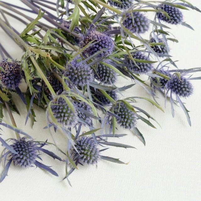 経験者が教える、簡単に作れるドライフラワーにおすすめの花材5選。