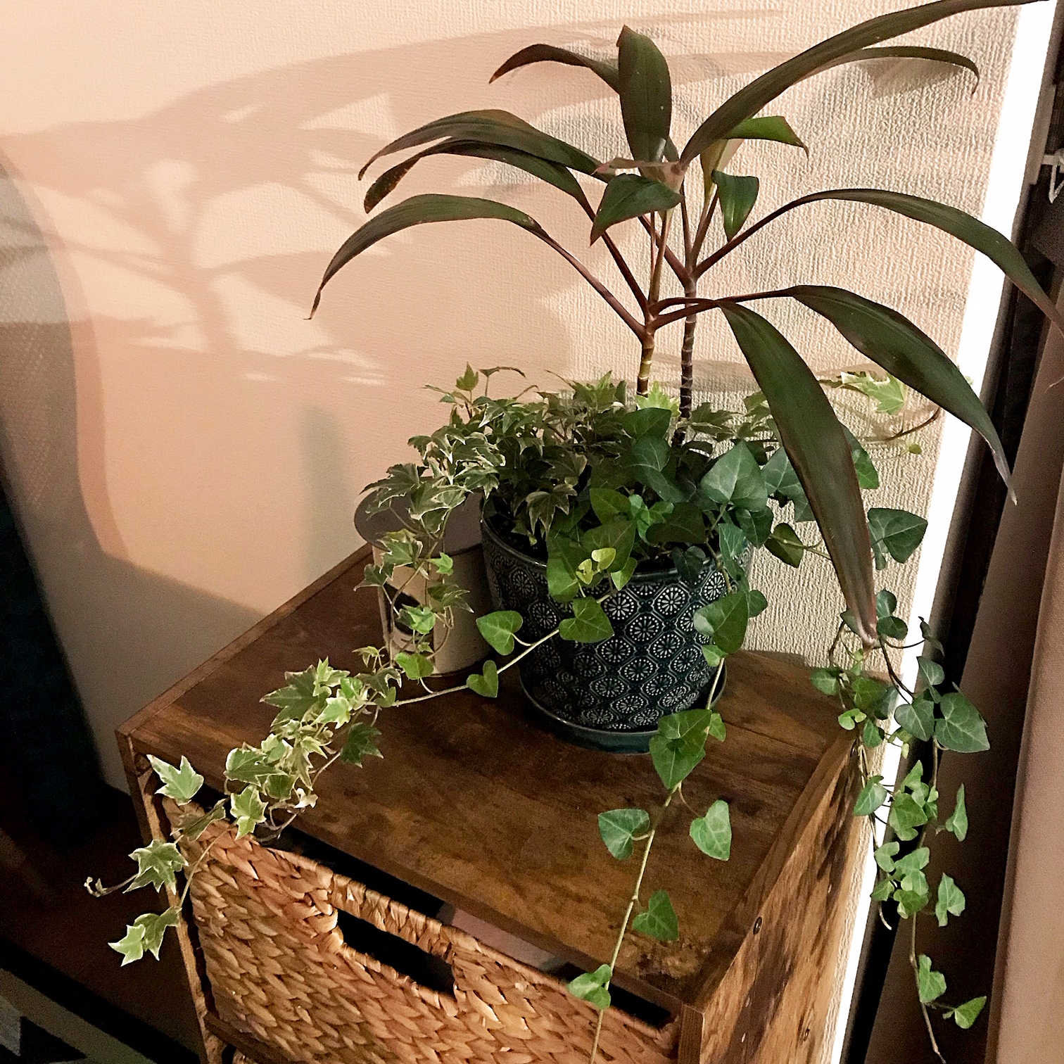 実は観葉植物は寄せ植えが楽しい!