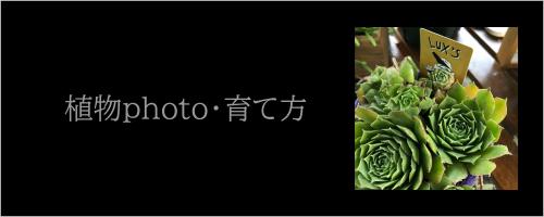 植物・育て方|造花専門店AOHANA